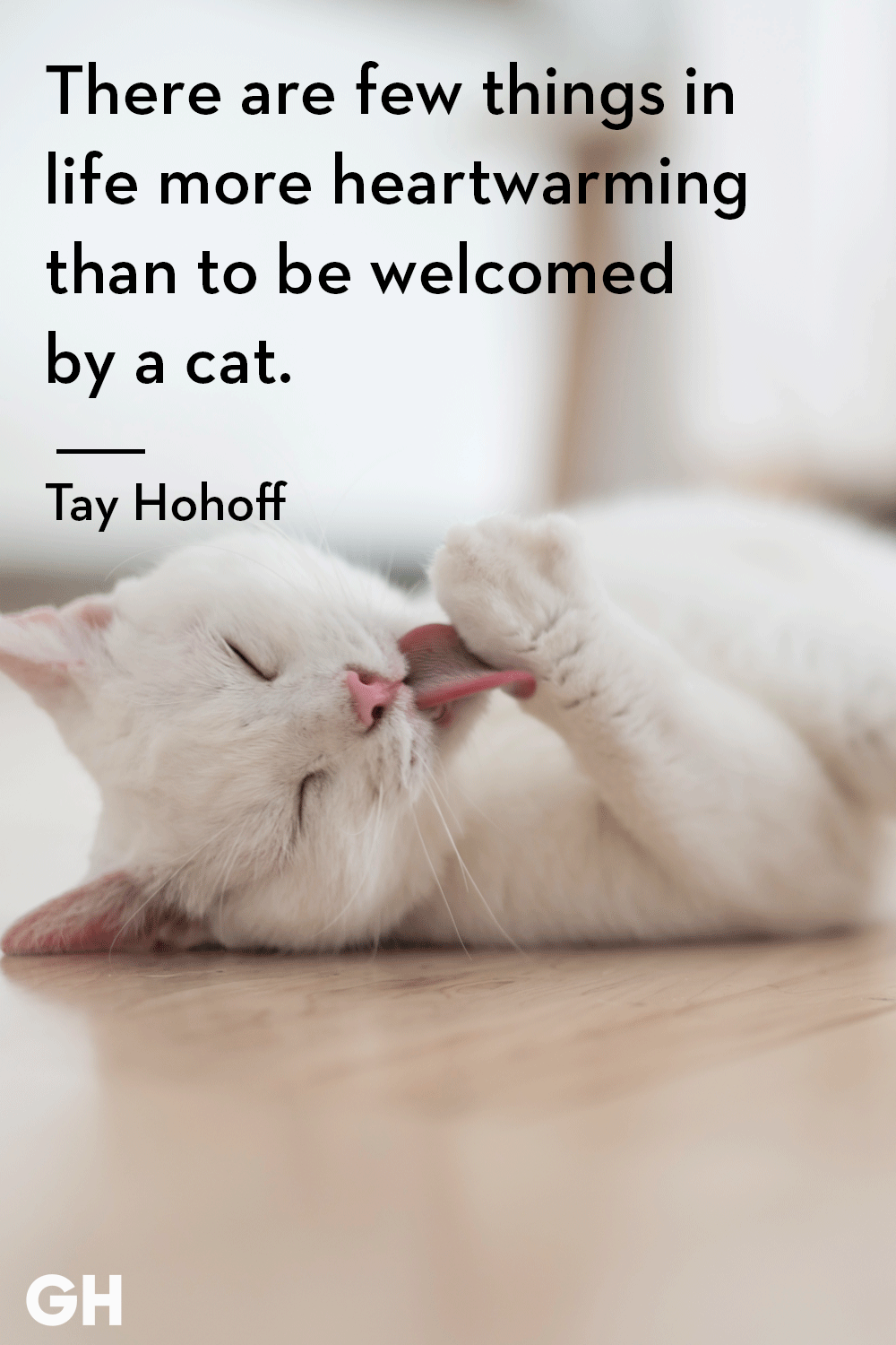 25 Quotes Only Cat Owners Will Understand Cat Quotes Funny Kitten Quotes Cat Love Quotes
