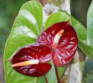 13 Enviflora