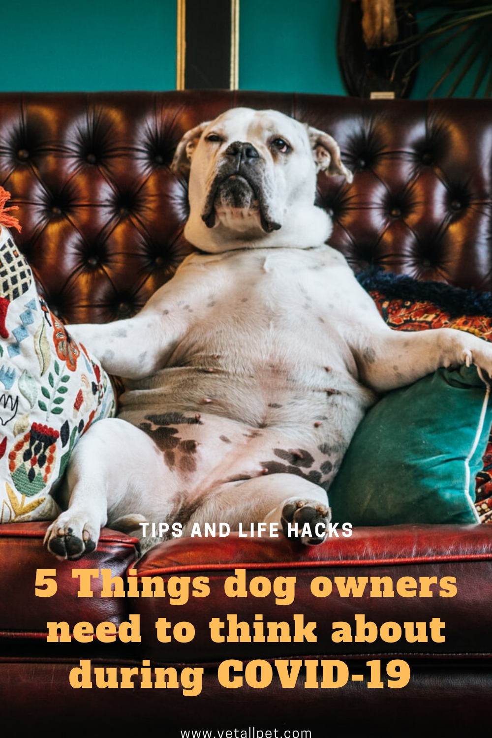 5 Things To Fight Dog Boredom In 2020 Dog Boredom Dog Parents Dogs