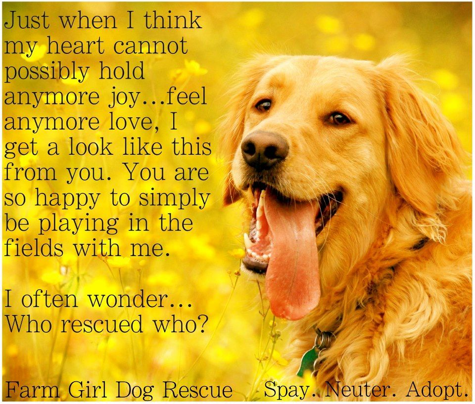 Love This I Helped A Dog Today She Jumped On My Back And I Had On Good Clothes It Was A Pleasure It Made My Day I Laughed And Dogs Girl And Dog