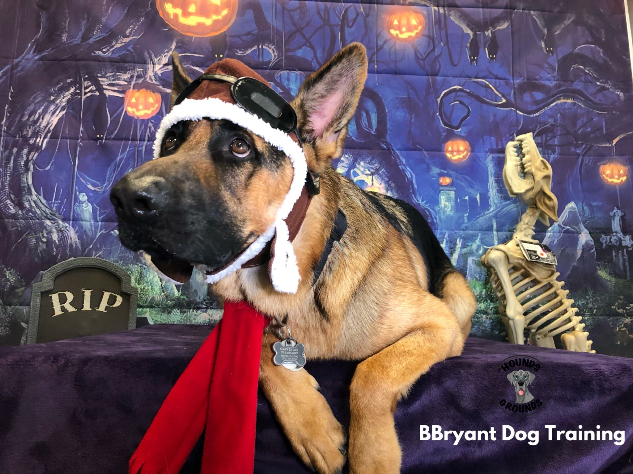 Pin By The Hounds Grounds On Halloween Dog Business Dog