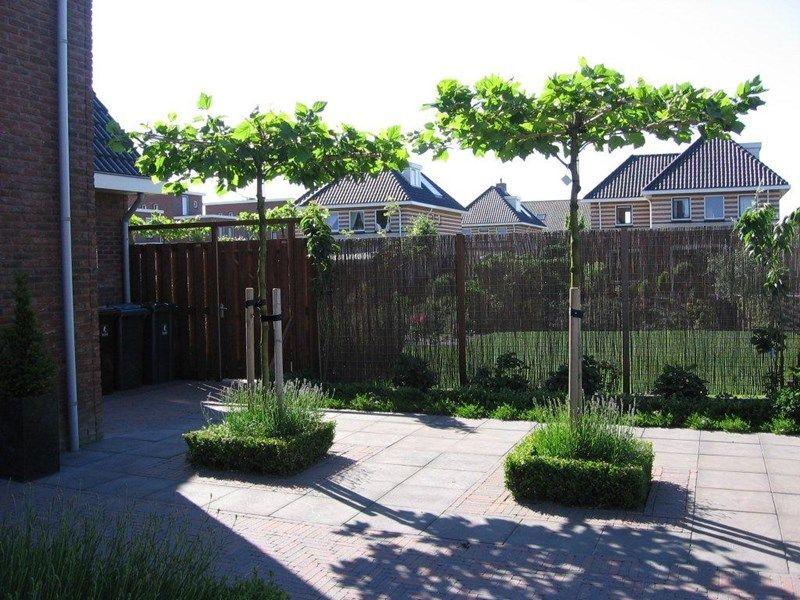 Parasolboom In Tuin : Parasolboom achtertuin google zoeken huis pinterest backyard