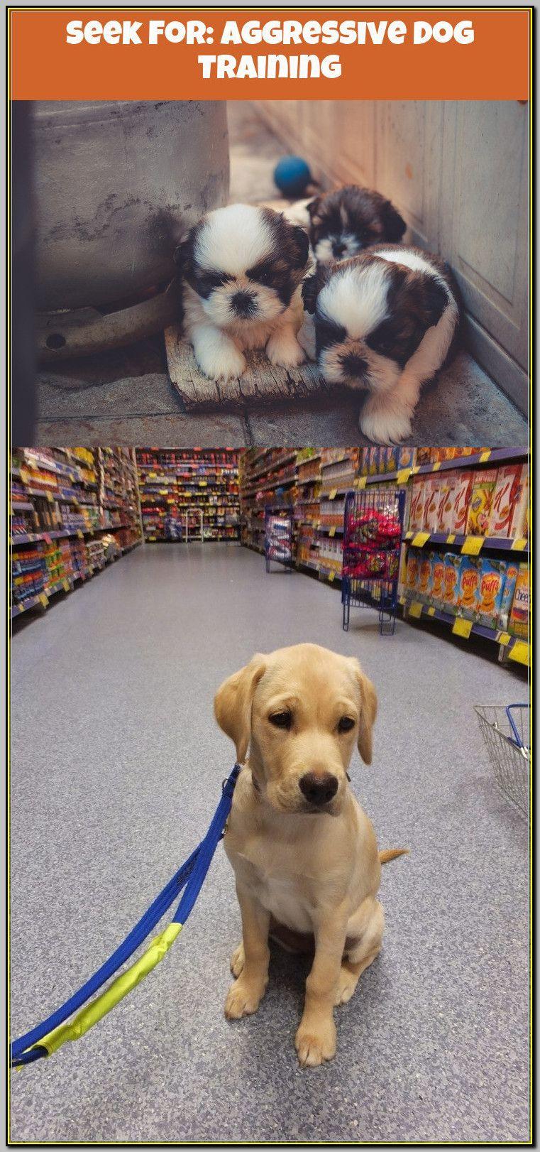 Pin On Aggressive Dog Training
