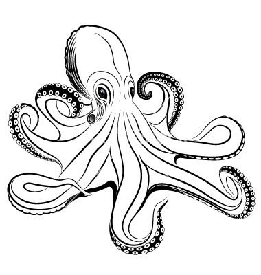 Octopus Vector 260919 By Flanker d On VectorStock Bar