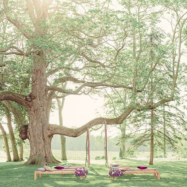 Ceremony Under A Tree: Earth Day .. Is Meant To Be Spent Under This 150 Year Old