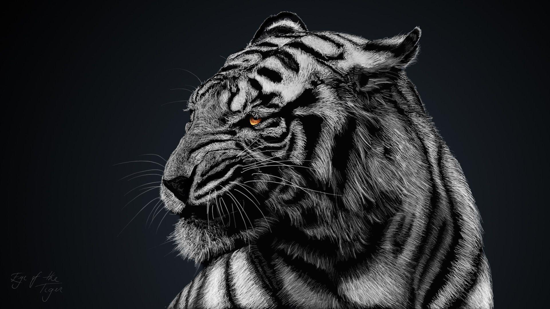 Full HD P Tiger Wallpapers Desktop Backgrounds X
