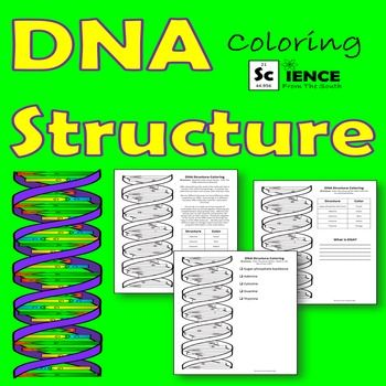 Dna Structure Coloring Worksheet Answer Key | Coloring ...