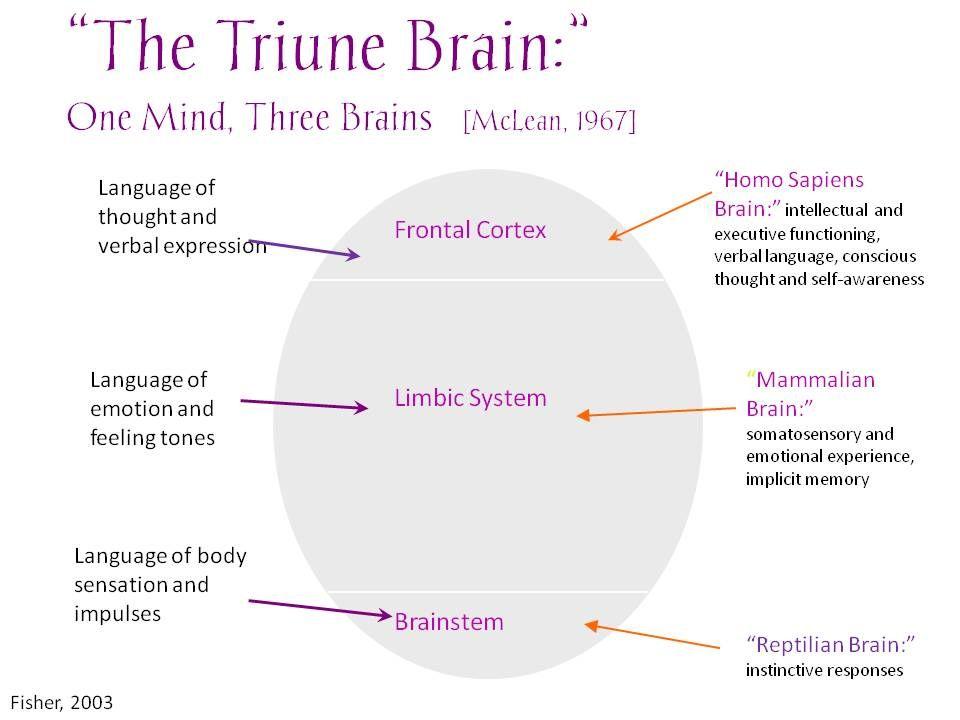 Triune brain also dream board pinterest neuroscience and trauma rh