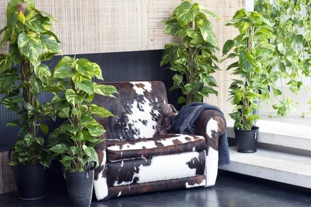 Kwiaty Doniczkowe Do Domu Kwiaty Doniczkowe Rosliny Pokojowe Fotogaleria House Plants Ivy Houseplant Green Interiors