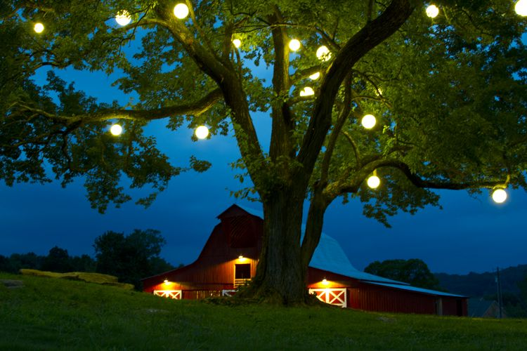 Pin On Landscape And Garden Outdoor Lighting