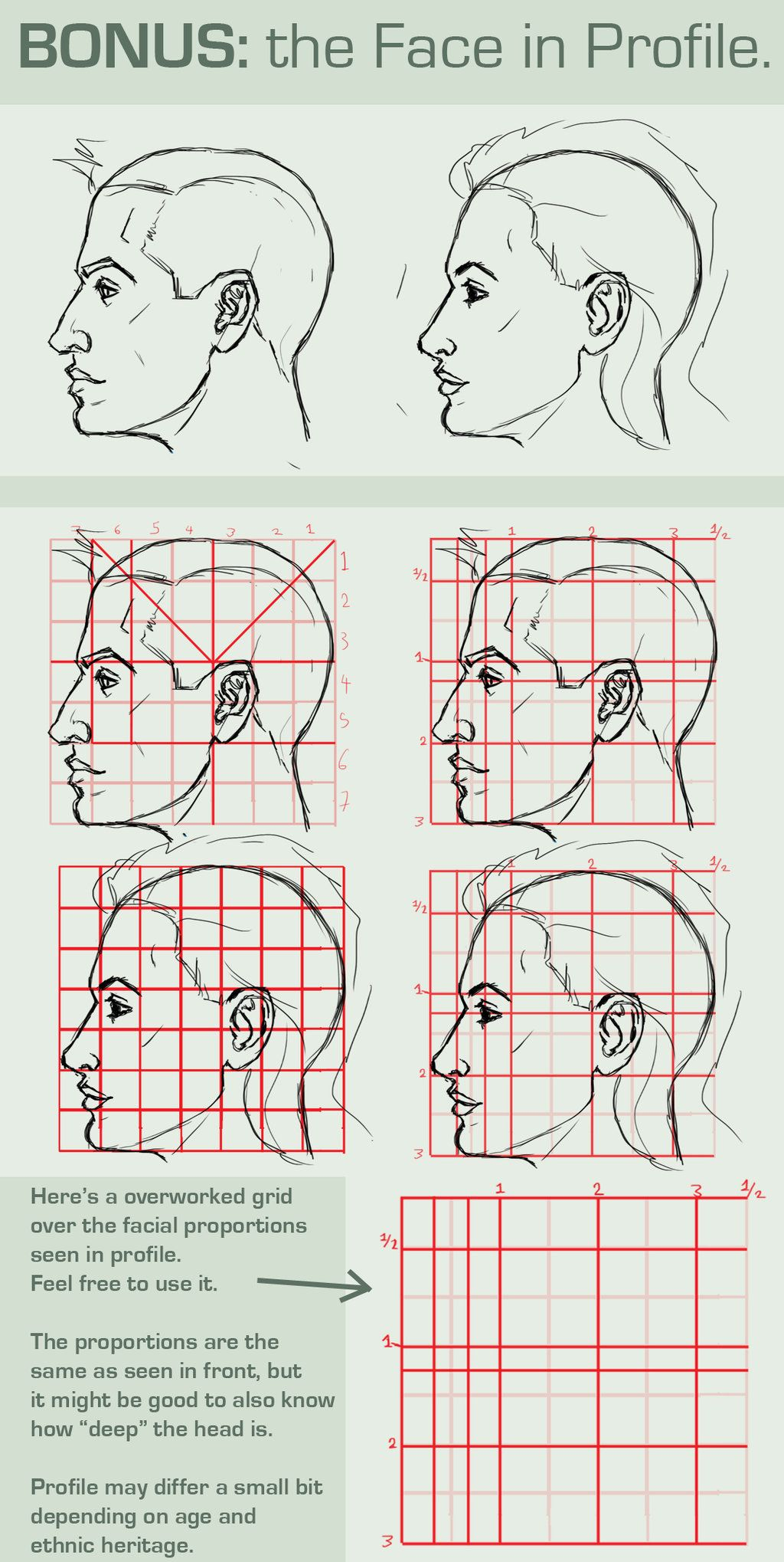Face Proportions Profile View By Foervraengd