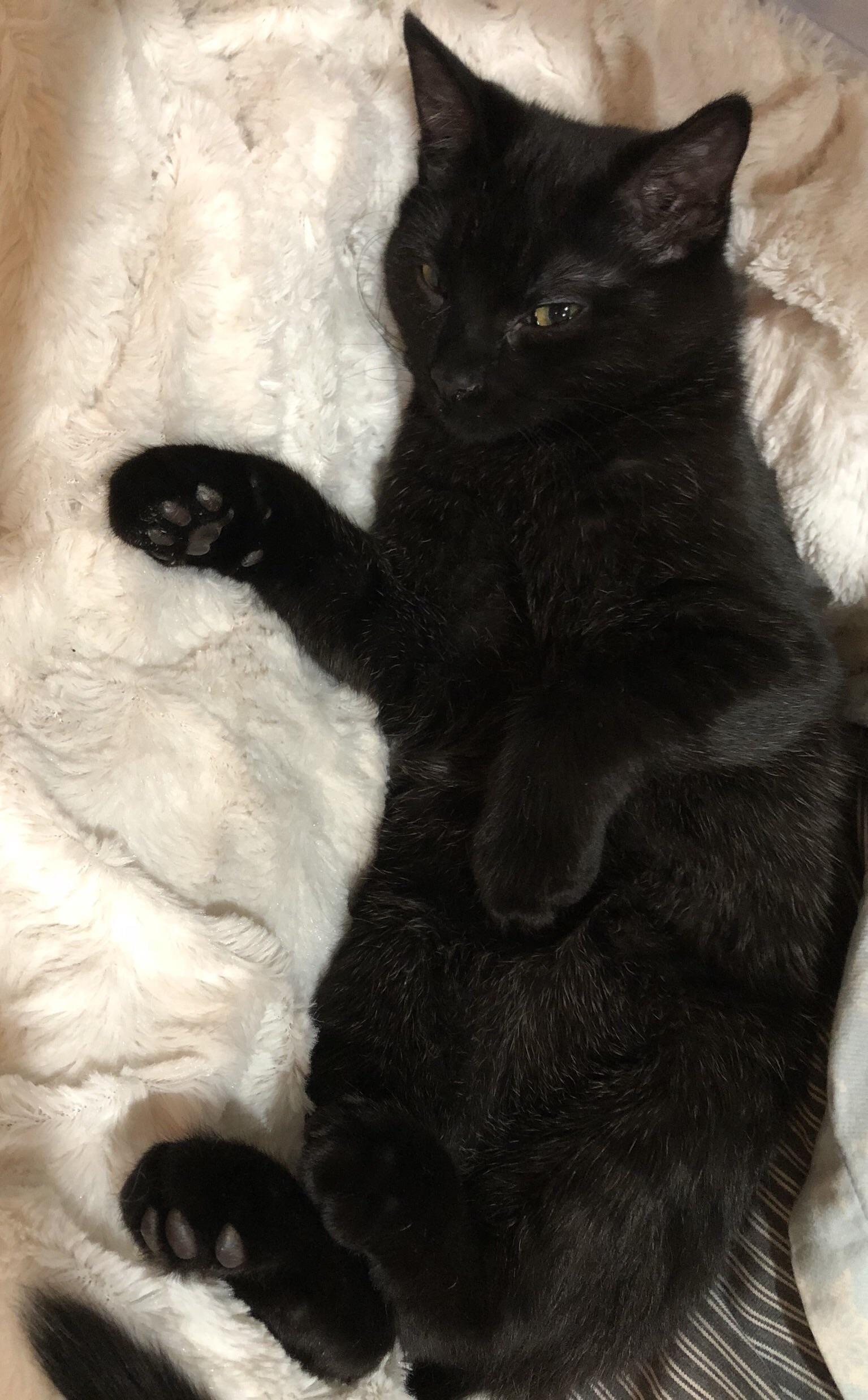 Pin On Luv Kittens