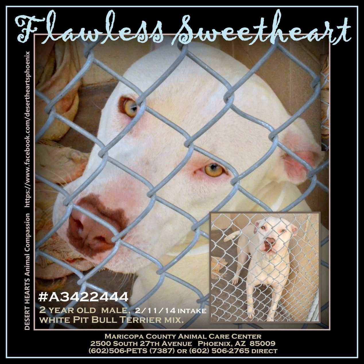 Featured Dog 2 13 2014 Status Due Out After 2 14 Will Need Adopter Or Foster Desert Hearts Animal Compassion Animal Help Dogs Up For Adoption Animals