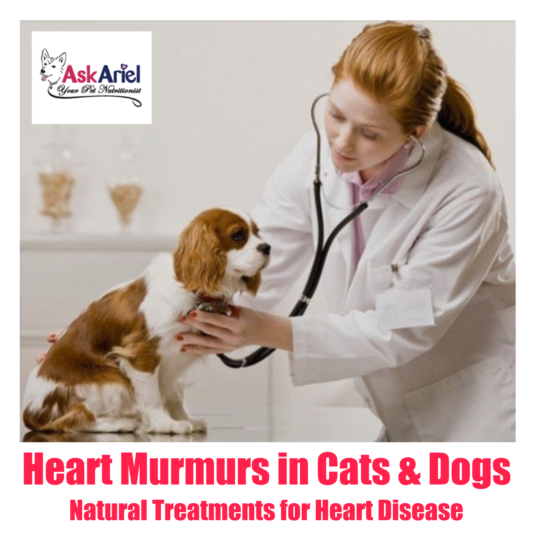 What is a heart murmur? It is an abnormal sound coming