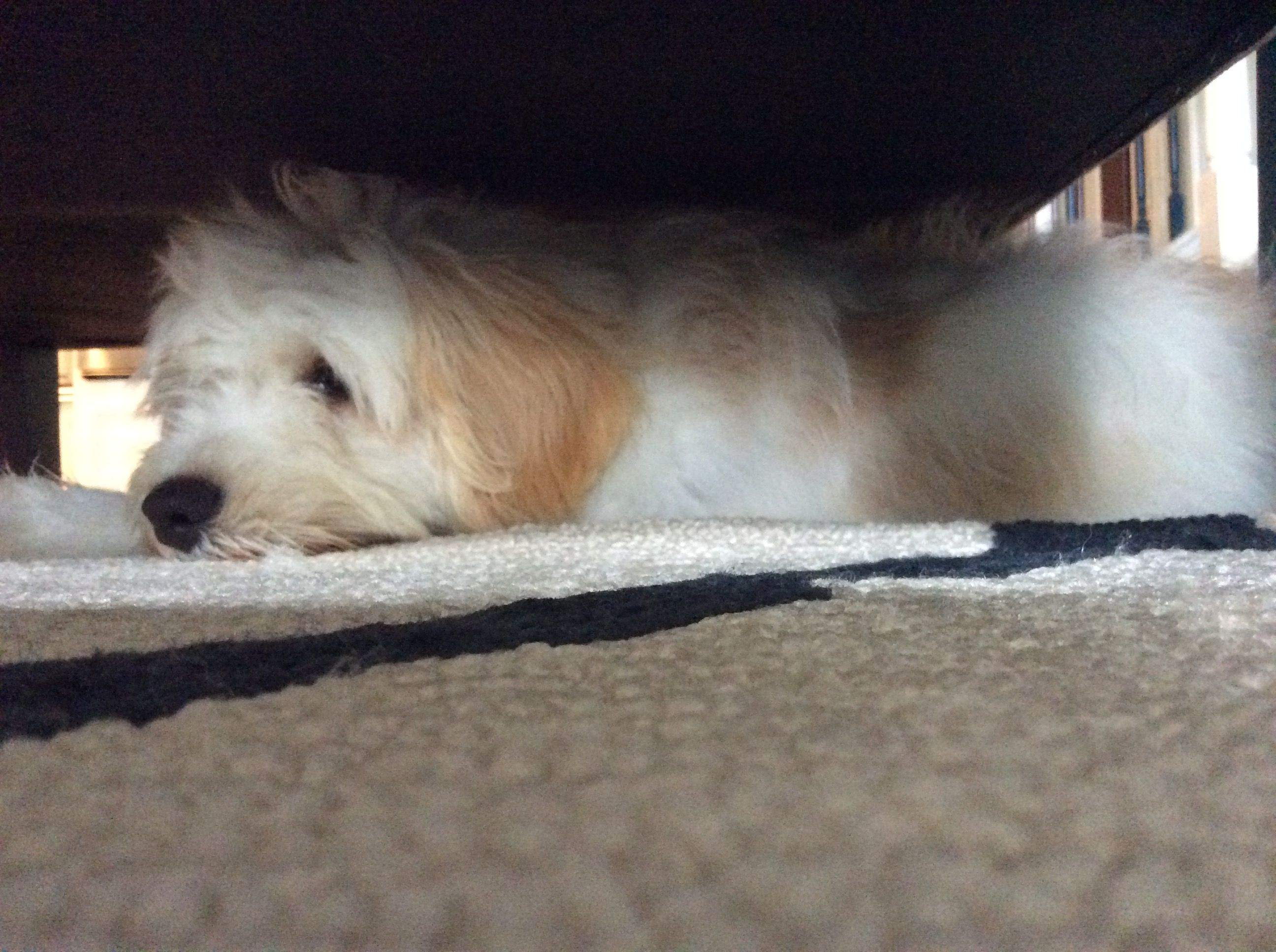 My pup stayed under a chair for two day when we first got her because she was so scared.