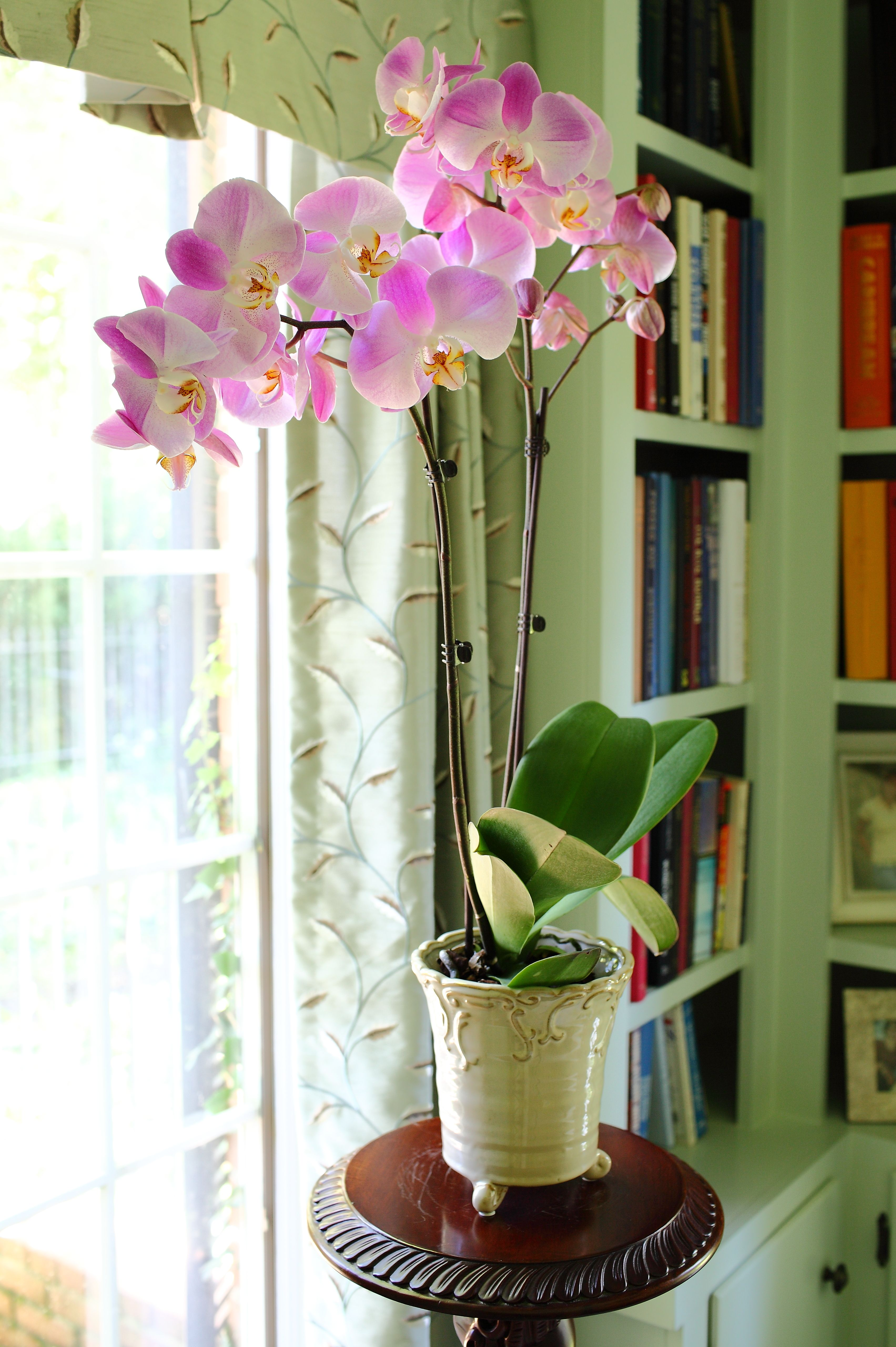 Diy Orchid Inspiration Orchid Care Diy Orchids Indoor Orchids