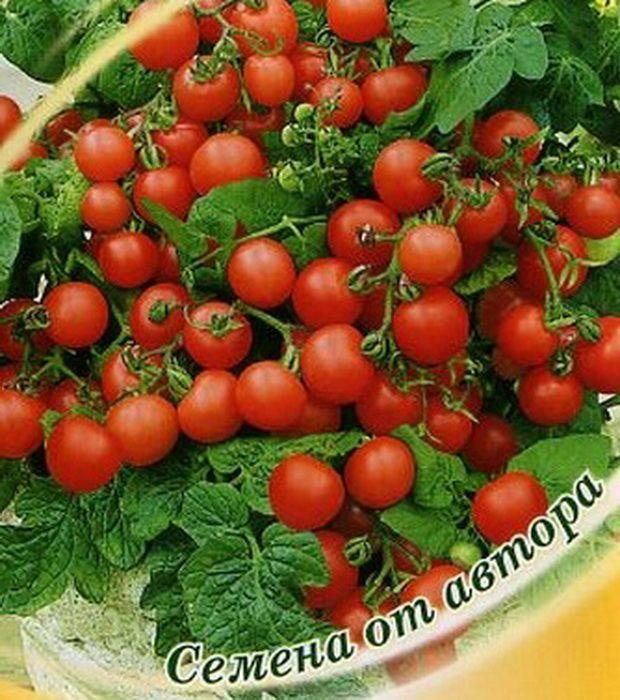 за какое время проклевываются семена помидор
