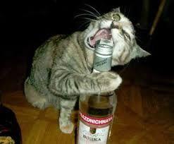 Gatos Locos Peleando Buscar Con Google Funny Animal Photos Cute Funny Animals Cat Drinking