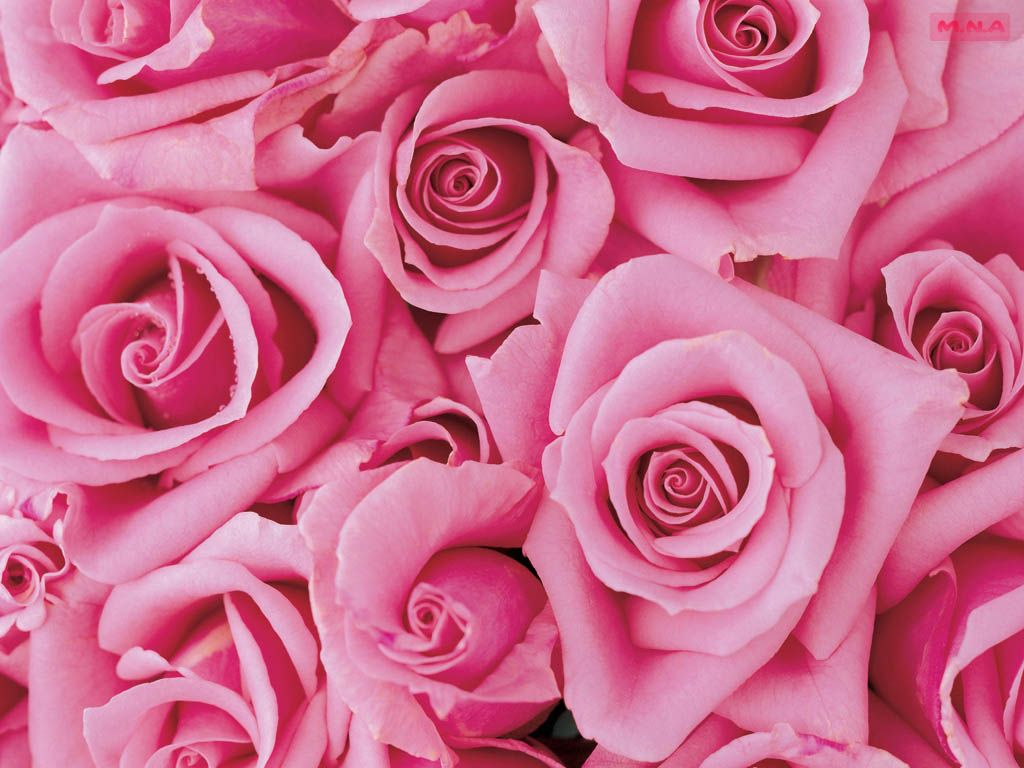 The Most Beautiful Pink Flowers Pink Flowers Wallpaper