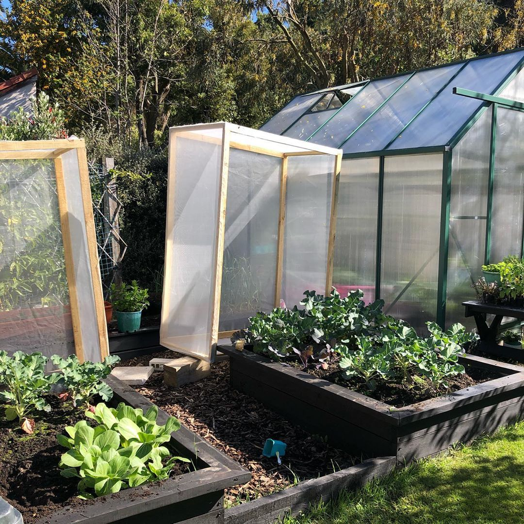 Hinges Need to get some But despite that produce is aphid and bug and snail free woohoo    oderingsgardencentres