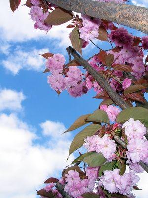 Buildable Cherry Blossom Tree Paper Art Paper Sculpture Art