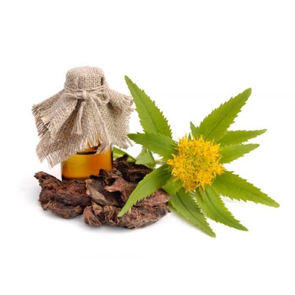 Rhodiola Rosea poeder kopen. Favoriet Chinees TCM kruid en om thee te maken. Eenvoudig Rhodiola online bestellen. KRACHTIG KRUID!