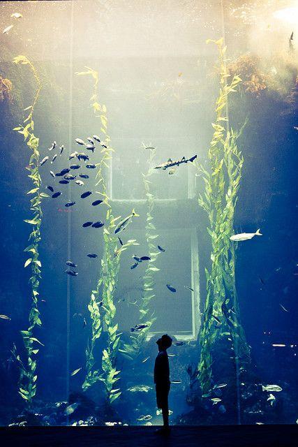 I Think I Am Small Aquarium Photo Photography