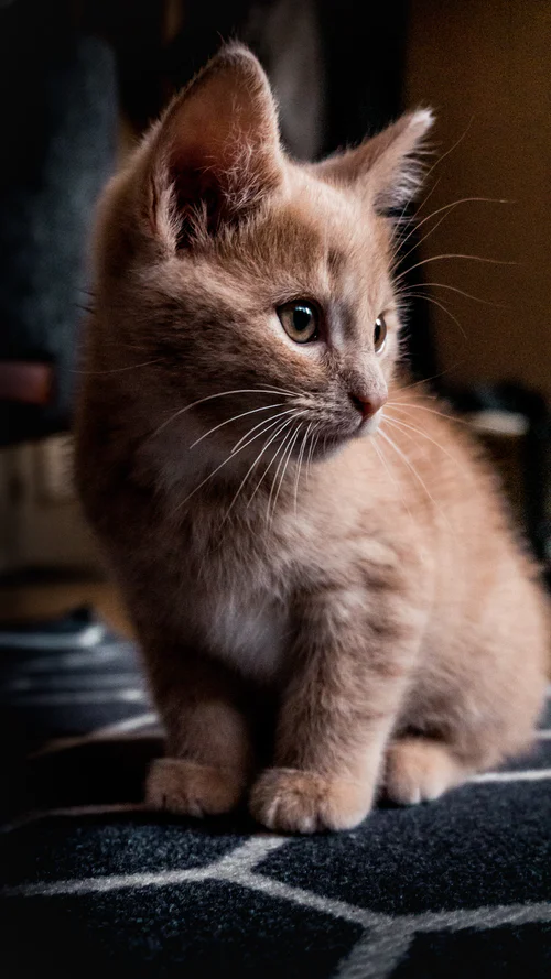 Cat Portait Pictures Download Free Images On Unsplash Cute Cats And Kittens Animal Photography Baby Farm Animals