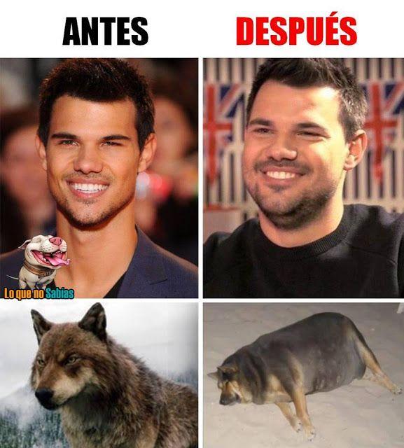 Nutrimeme Memes Perros Memes Divertidos Memes Malos