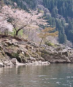 Paljon Japanista