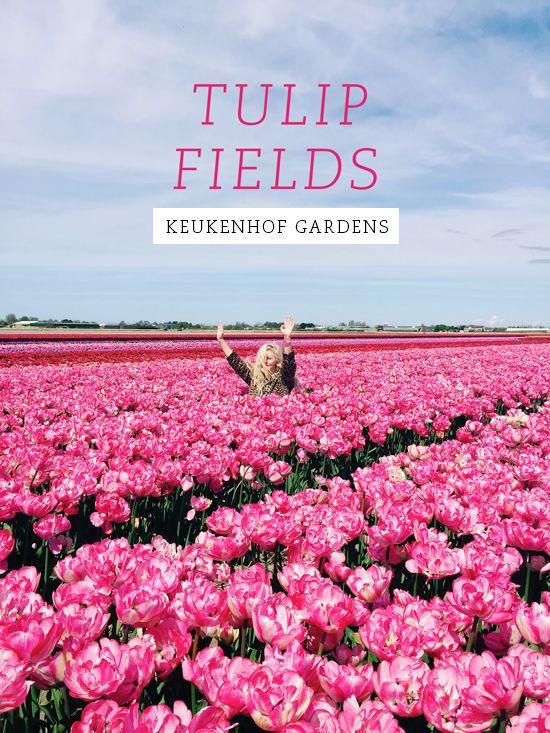 tulip fields | designlovefest