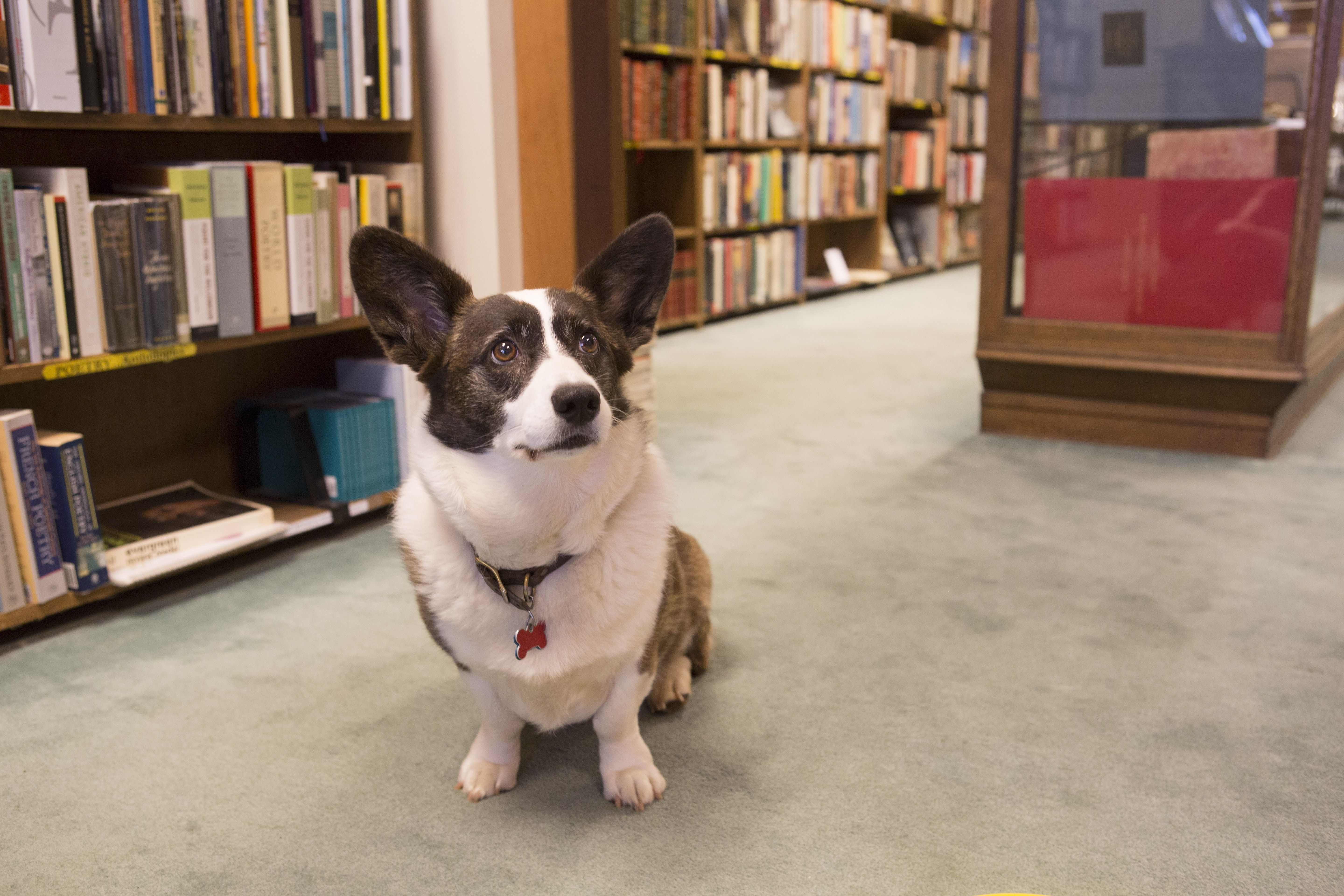 Say Hello To Gizmo From Blue Whale Books Photo By Mina Pirasteh