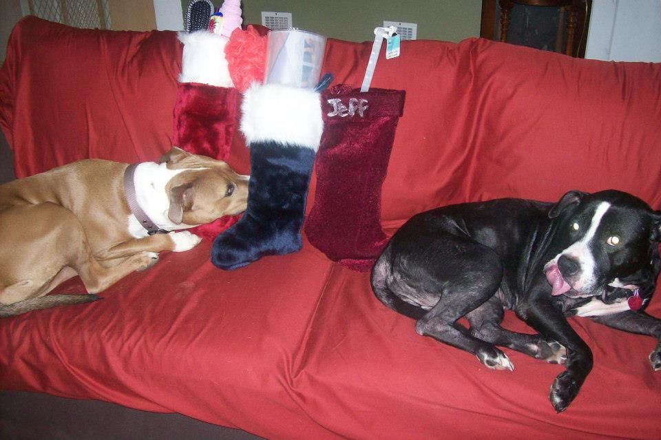 """Roz & Jealousy """"protecting"""" the stockings Dec 2012"""