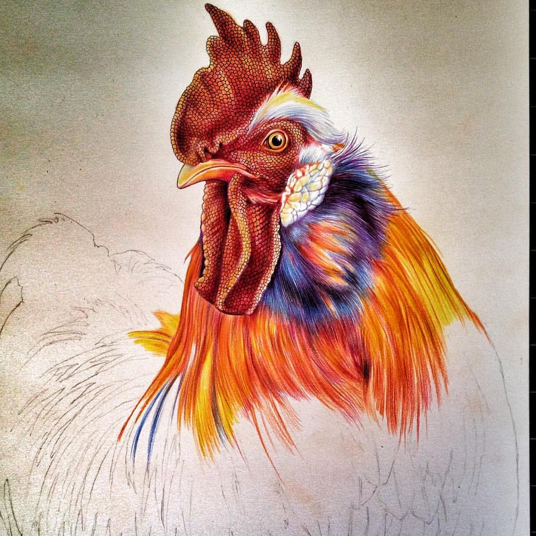 Rooster Art Google Search Roosters Pinterest