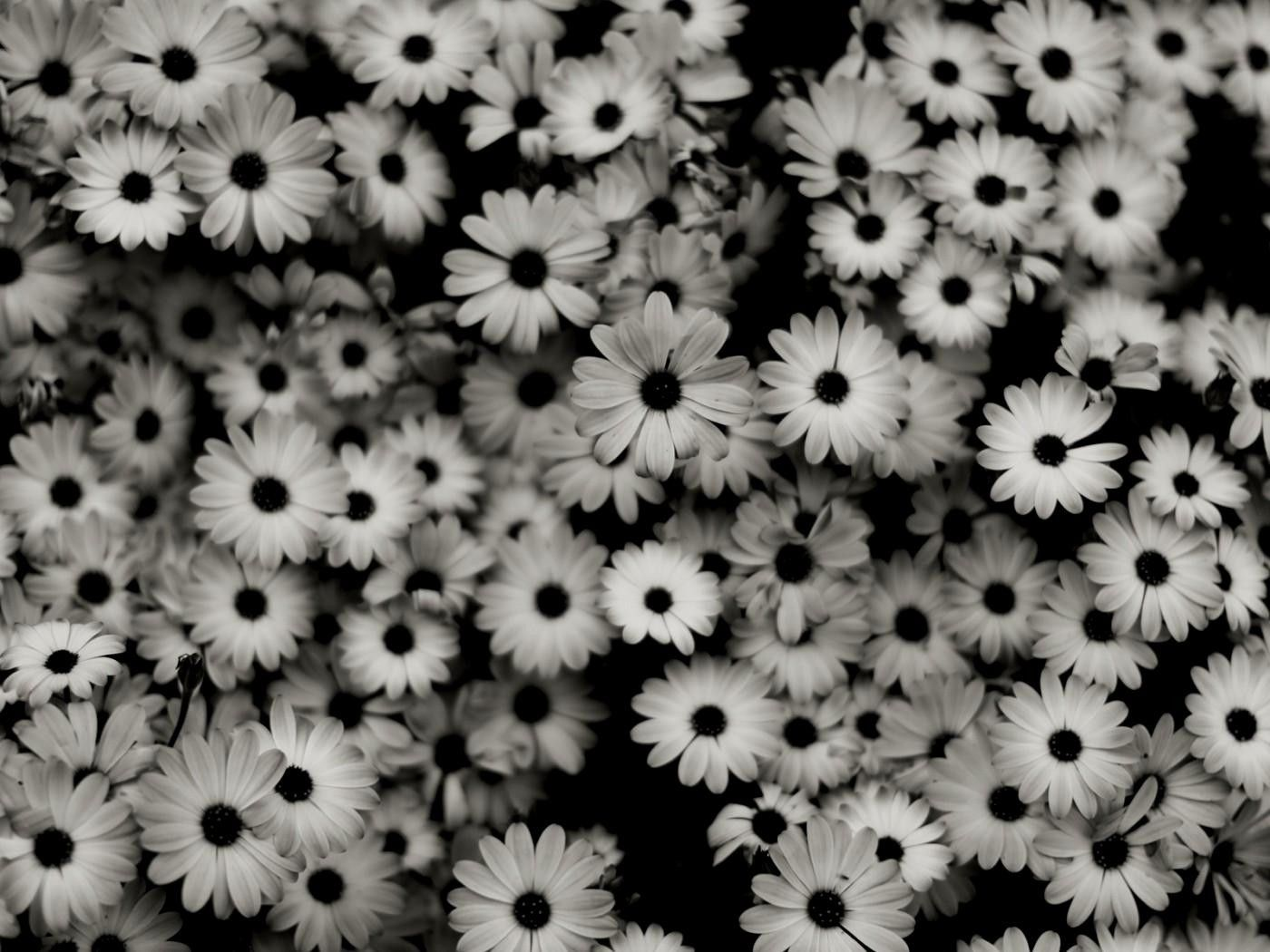 Wallpapers bonitos do tumblr preto e branco Fundo preto