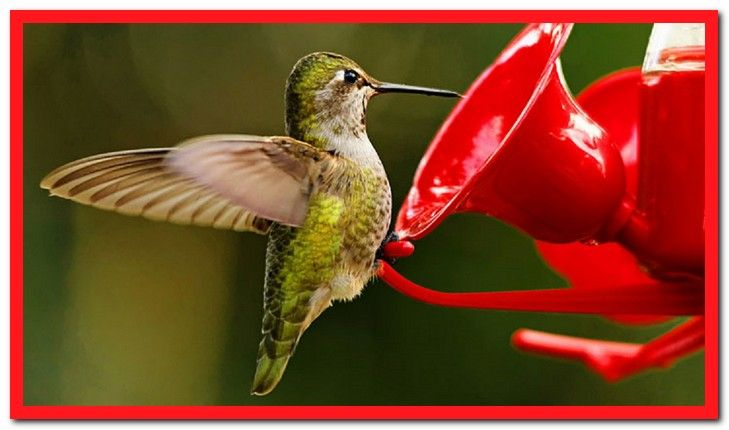 how to make hummingbird food mixture