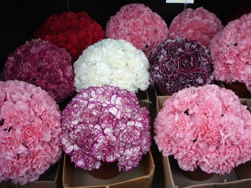 Carnation Balls Corporate Flowers Flower Arrangements Floral