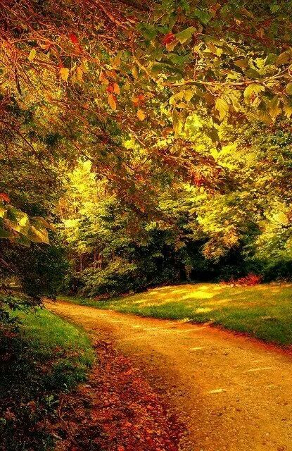 Beautiful Autumn Path  Thinking Of My Mom Today! I Guess She Is Extra Close  Today. She Always Loved Fall.