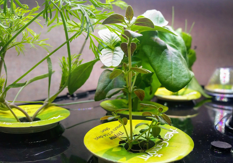 Pruning Aerogarden Blog Hydroponic Gardening 400 x 300