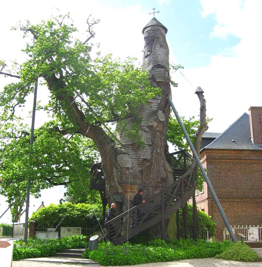 [The Chêne Chapelle] Old #oak tree home to two small chapels. Located in the small French farming village of #AllouvilleBellefosse, #France the tree has grown in pace with the development of the French country itself. Said to have begun growing 1000 years ago.