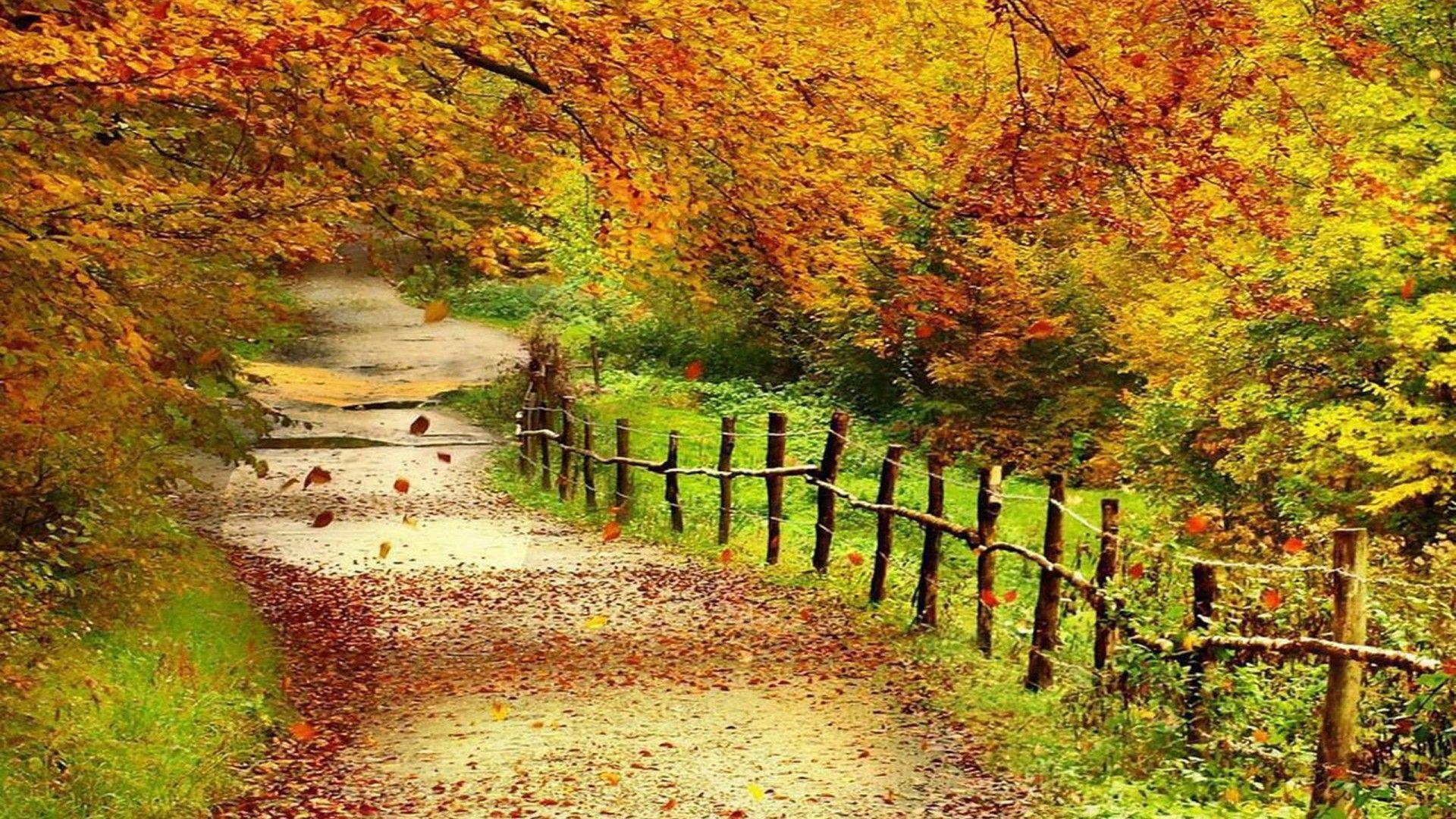 most beautiful autumn beautiful autumn scenery