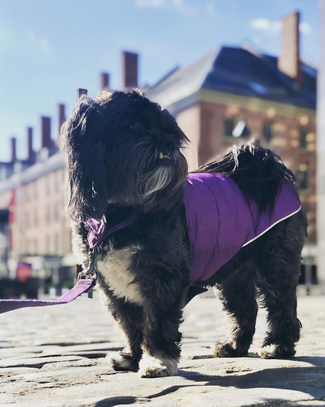 When The Dogs Begin To Smell Her : begin, smell, Sweet, Preferred, Taking, Sniffing, Every, Smell, Could, Rather, Walking, Enough, Get..., Girls,, Animals,