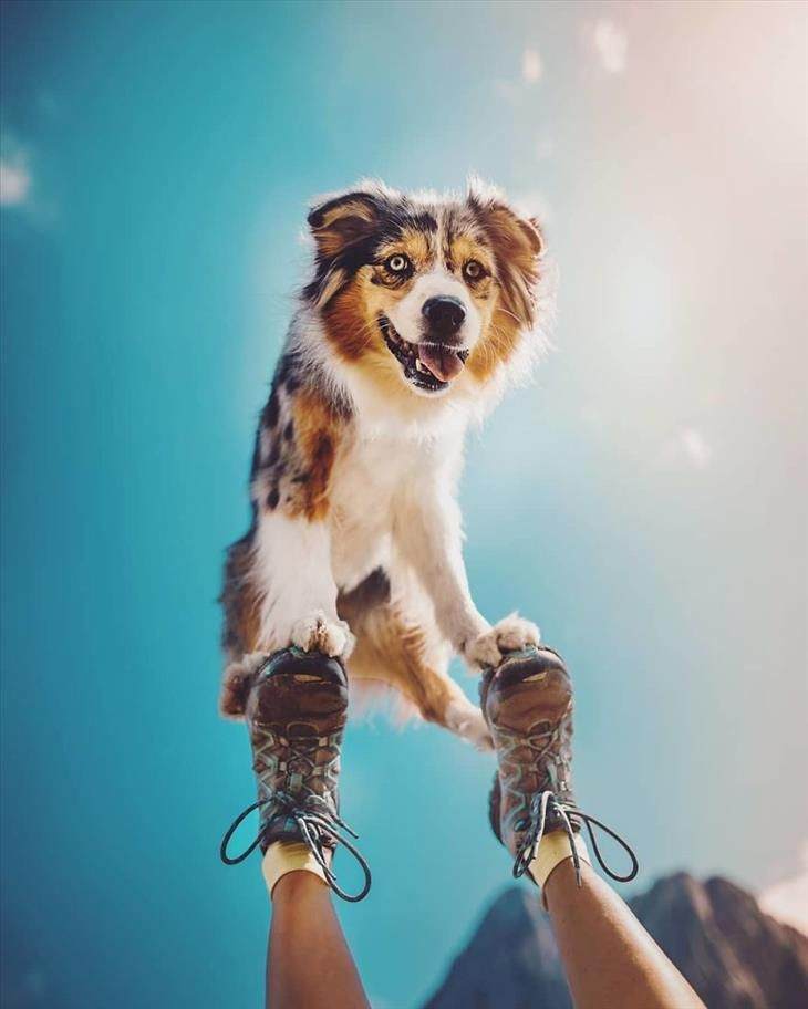 best-dog-pictures #dogsphotography