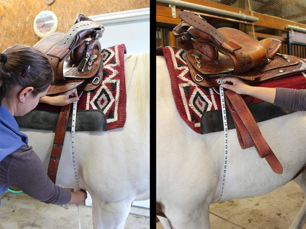 Do you have the right size cinch for your horse cinch