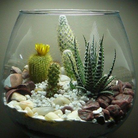 Voici un kit terrarium tout y est pour faire un joli mini jardin d 39 int rieur substrat sable - Kit terrarium plante ...