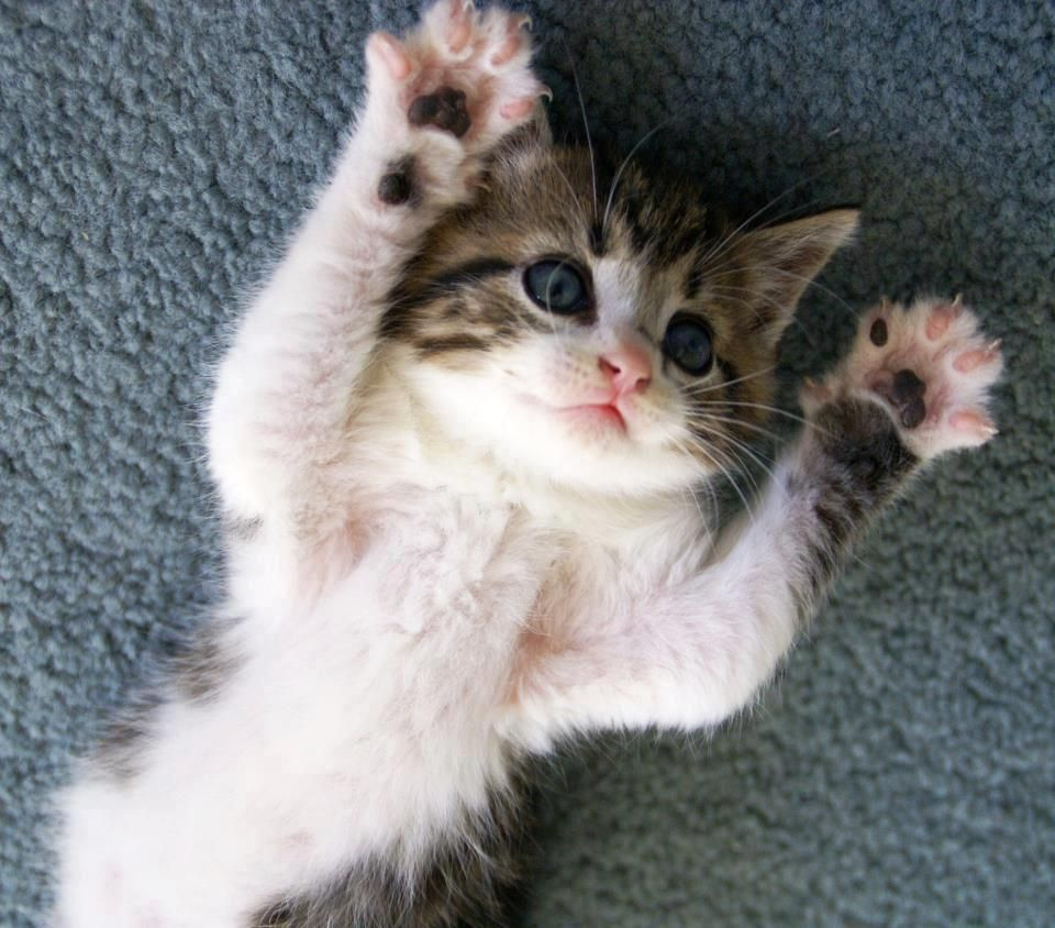 I Put My Hands Up In The Air Sometimes Singing Ayyeee O Imma Let Go Cats And Kittens Cute Animals Cute Cats