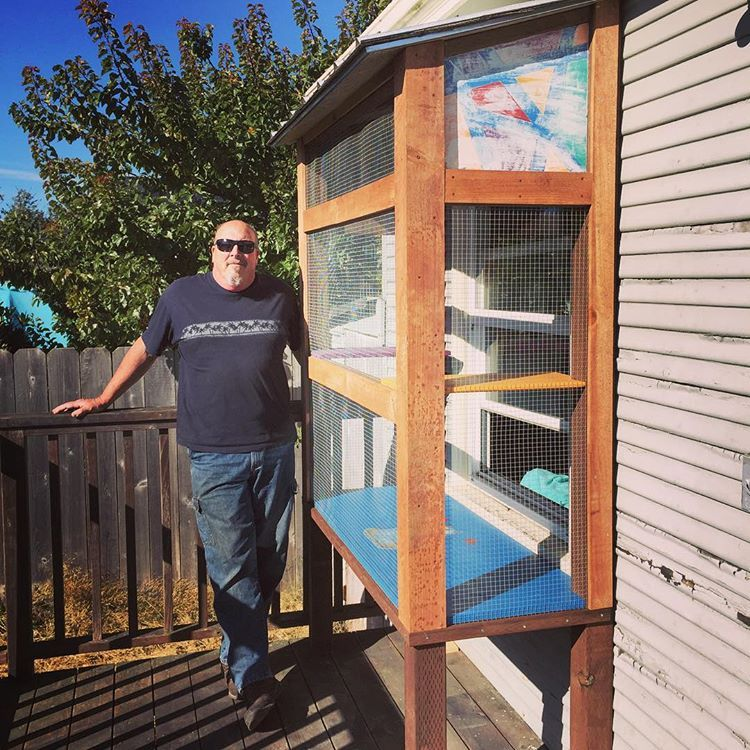 """My awesome dad built my cats a """"Catio""""!"""