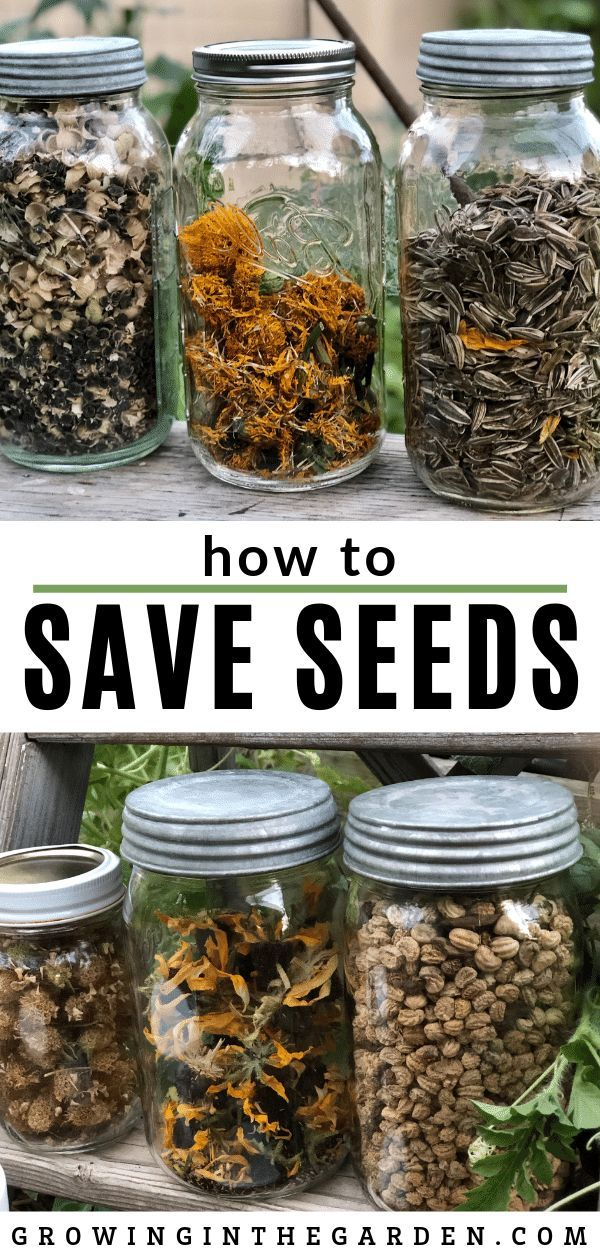 How to Save Seeds | Growing In The Garden