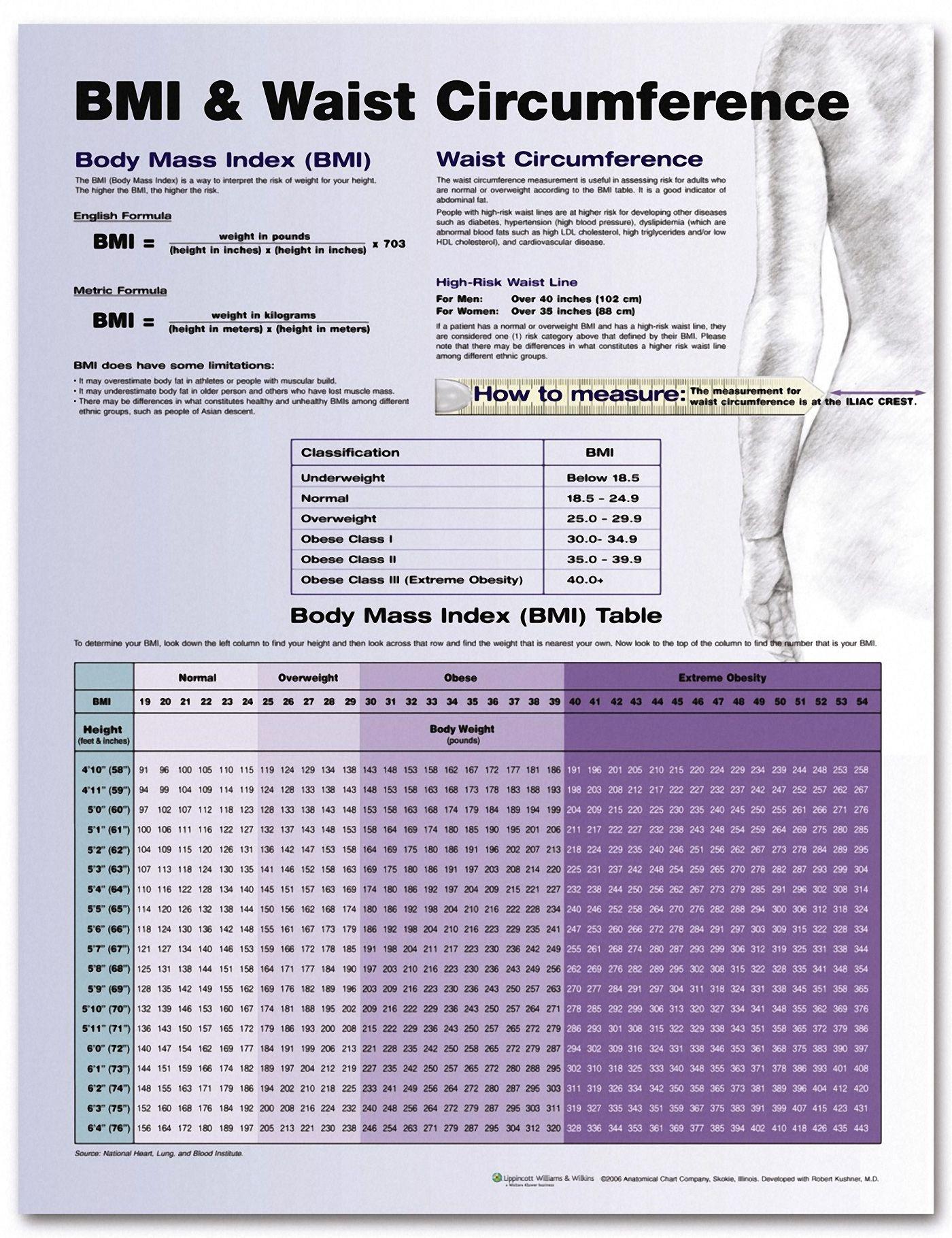 Bmi And Waist Circumference Chart