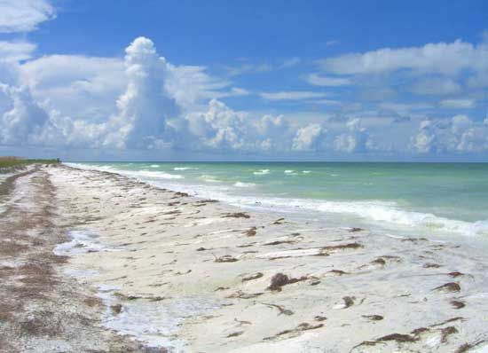 Honeymoon Island State Park Tampa Bay The Ramblin Travel Guide Dog Friendly